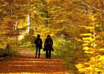 Šumavský barevný podzim